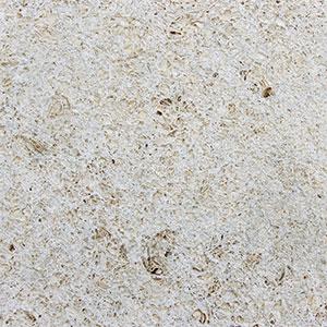 Coquina / Shell Stone